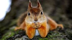 funny, humor, tree, paws, funny, protein, face, squirrel, red