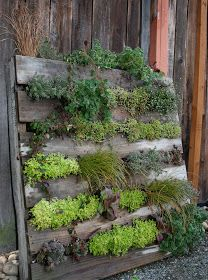 urban food producer: Shipping Pallet Vertical Planter. Maybe a herb garden?