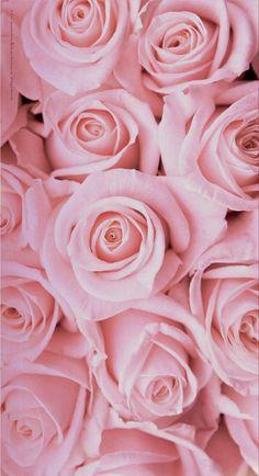 Flower Phone Wallpaper, Cute Wallpaper Backgrounds, Aesthetic Iphone Wallpaper, Flower Wallpaper, Cute Wallpapers, Beautiful Bouquet Of Flowers, Beautiful Flowers Wallpapers, Beautiful Roses, Pretty Flowers
