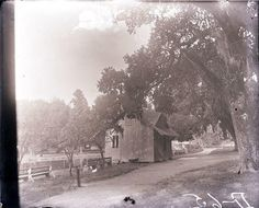 View of an unidentified cottage or shack on the edge of a body of a pond. A large oak tree and benches are visible. Loyola University New Orleans, Louisiana State University, Louisiana History, Louisiana Tech, Oral History, Teaching History, Types Of Resources, Oak Tree, History Museum