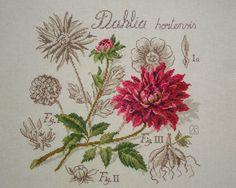Моя серия ботаника от Veronique Enginger . La Dahlia. Георгин