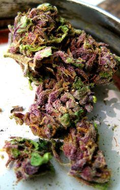 We got that purple kush