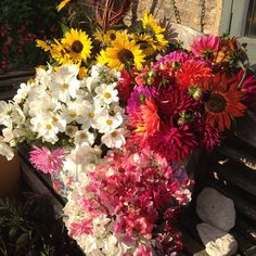 blinding brights - all grown at common farm flowers in somerset - september