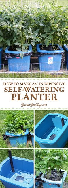 Self watering containers are an enclosed growing system that decreases moisture evaporation and offers a consistent water supply to your plants. It is made up of two chambers, the growing chamber and the water reservoir chamber. The growing chamber contains a wick that descends into the water reservoir that pulls water up into the growing chamber as needed for the plants.