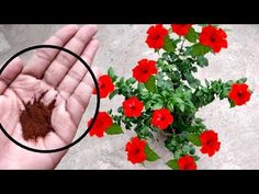 Veg Garden, Garden Care, Container Gardening, Gardening Tips, All About Me Preschool Theme, Hibiscus Plant, Cake Decorating Videos, Diy Home Crafts, Growing Plants