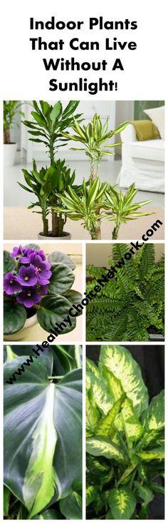 #indoor #plants #garden #no #sun #sunlight #poor #low #garden #gardening #tips
