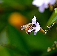 Atricle - Honey Bee Beekeeping for Beginners