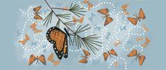 41º Aniversario del descubrimiento del Santuario de la Mariposa Monarca