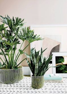 Green indoor plants with pale pink background, white arrow print mudcloth, House Plants Decor, Plant Decor, Plant Design, Garden Design, Indoor Canopy, Diy Plant Stand, Plant Stands, Decoration Plante, Pot Plante