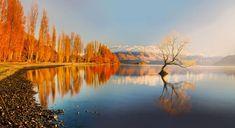 Lake Wanaka with the Lonely Tree at the center, New Zealand | Photo by Abupam Hatui @natgeo