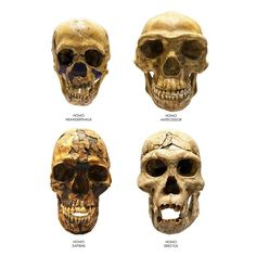 DNA analysis reveals how humans interbred with Neanderthals Paragon Monday Morning LinkFest