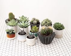 Our 2nd delivery of Cacti and Succulents from @geo_fleur are now available from @yourportofcall and on our online store! Get down here before our staff by them all @_josephday_ @kezdogbillionaire @jenniferetchells. . . . . .  #plants #plantlife #cacti #cactus #succulents #succulent #desertplants #home #house #interior #interiorstyle #ceramics #lifestyle #cornwall #stives #shoplocal #geofleur #indoorplants #concrete #plantstagram #plantsofinstagram #geometric #botanical #vscoplants