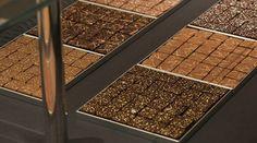 JACQUES GENIN  |  Fondeur en chocolat  •  Ma Sérendipité