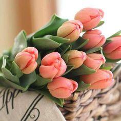 New Wall Paper Desktop Pink Tulip Ideas Tulip Bouquet, Succulent Bouquet, Succulent Care, Diy Flowers, Flower Pots, Beautiful Flowers, Flower Diy, Succulent Centerpieces, Succulent Terrarium
