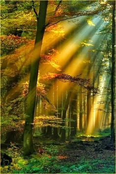 Amazing Snaps: Golden rays in the Schwarzwald - Black Forest of Germany by Ammazed