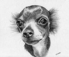 chihuahua drawing - Google Search