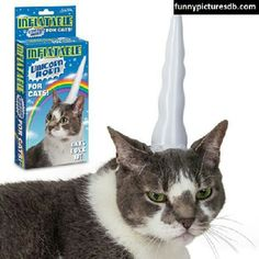Unicorn horn. #lol #cat #smile #nature #animals #life #instagood #photooftheday #cool #hot - @Funny Pictures DB- #webstagram