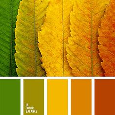 Colour Palette Vibrant and expressive coloration gamma related to stunning and a bit melancholy season of the 12 months – autumn. Taking a look at these colours, plainly you ca. Orange Color Palettes, Color Schemes Colour Palettes, Green Color Schemes, House Color Schemes, Colour Pallette, Color Palate, House Colors, Color Combinations, Autumn Color Palette