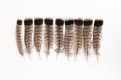ruffed grouse feathers (photo by mary jo hoffman)