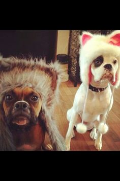 OMG, I can't get enough of these boxers with furry hats!!!! <3