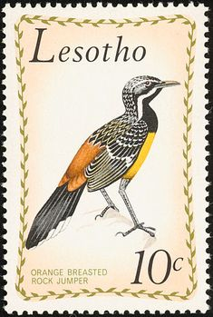 Drakensberg Rockjumper stamps - mainly images - gallery format