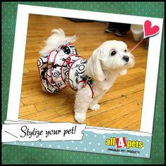 #stylize your #pet with funky accessories!