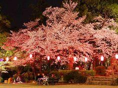 この画像は「大阪のお花見にお出かけ♡夜桜あり6選!」のまとめの8枚目の画像です。