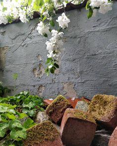 Sade tuo värit esiin. 💕 Kiireinen kevät yllätti taas mutta kyllä tästä selvitään. Tänään saatiin ison projektin ensimmäinen vaihe asiakkaalle näytille ja vielä olisi useampi pikkuprojekti viimeisteltävänä ennen lomia. Onneks välillä ehtii ihmetellä kukkivaa pihaa. Ihanaa viikonloppua kaikille 🍃🍃 Plants, Instagram, Essen, Plant, Planets