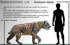 Smilodon_fatalis_life-restoration_'08.jpg (2258×1458)