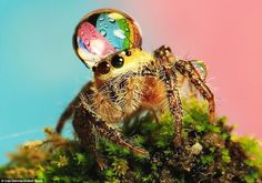 Spinnen im Objektiv