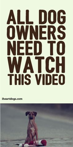Please.....even if you don't own a dog...please watch this video. Yes at first it's so hard to get by through. But I promise it will be long worth the wait to the end. Please don't skip thru...I myself thought it was dumb until I saw the end of the video...I cried....cried so much...