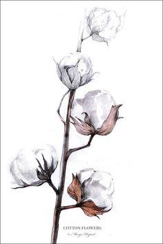 kartki pocztowe Bawełna / Cotton Flowers - Margo Hupert