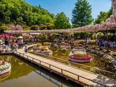 Ashikaga City: Wisterias and Ancient Colleges
