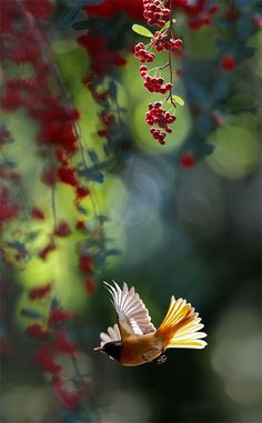 good photo of bird flying with floral background to use as inspiration for a drawing or painting