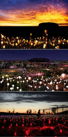 Bruce Munro - Field Of Light (Uluru 2016) #Art #ContemporaryArt #Installation