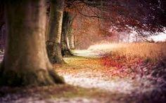 Original Landscape Photography by Sasha L'estrange-bell Autumn Nature, Autumn Leaves, Canvas Pictures, Art Pictures, 3 Piece Painting, Cheap Paintings, Nature Prints, Canvas Wall Art, Landscape Photography