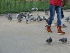 Pigeons Pigeon, Lifestyle Photography, Garden Sculpture, City Photo, Outdoor Decor