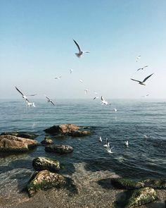 Какое же море каждый день по-разному прекрасное! Не перестаю восхищаться и наслаждаться...  #love_my_wings by karishashasha