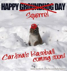 Louis Cardinals Why not? the groundhog screws it up every year anyway St Louis Baseball, St Louis Cardinals Baseball, Stl Cardinals, No Crying In Baseball, Spring Training, National League, The St, Baseball Cards, Baseball Pics
