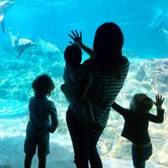 A SeaWorld Tour with