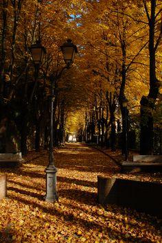 Piacenza, Italy (by Stema Photography)