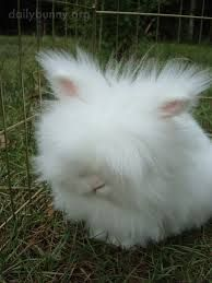 Image result for fluffy bunnies