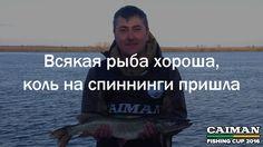 Всякая рыба хороша, коль на спиннинги пришла   Поговорки о рыбалке от Caiman Fishing Cup 2016. http://www.caiman.ru/fishing/  Следите on-line за нашим уловом!  #рыбалкавастрахани #caimanfishingcup #рыбалка #астрахань #мумра #база177
