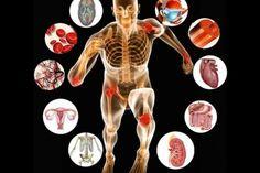 ανατομία σώμα