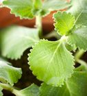 Simple steps for growing your own successful windowsill herb garden.