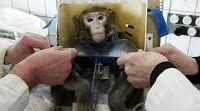 """""""O GRITO DO BICHO"""": Os macacos vão para Marte em 2017"""