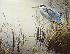 The Art of Robert Bateman.  Great Blue Heron.  One of my favorite birds.
