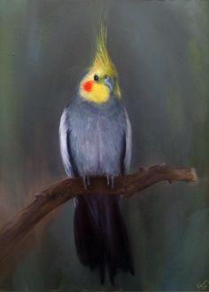 Booboo the Cockatiel Bird Oil Painting - Zach Timberlake Fine Art