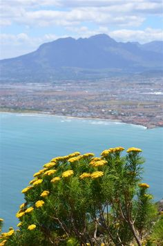 The Helderberg mountain - Somerset West's most well known beacon as seen from the Hottentots-Holland mountain range across False Bay (Cape Town). Wonderful Places, Beautiful Places, Beautiful Pictures, Clifton Beach, South Afrika, African States, Somerset West, Safari Adventure, Coastal Homes
