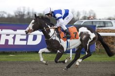 I'm in love with this horse,, Modern Society <3